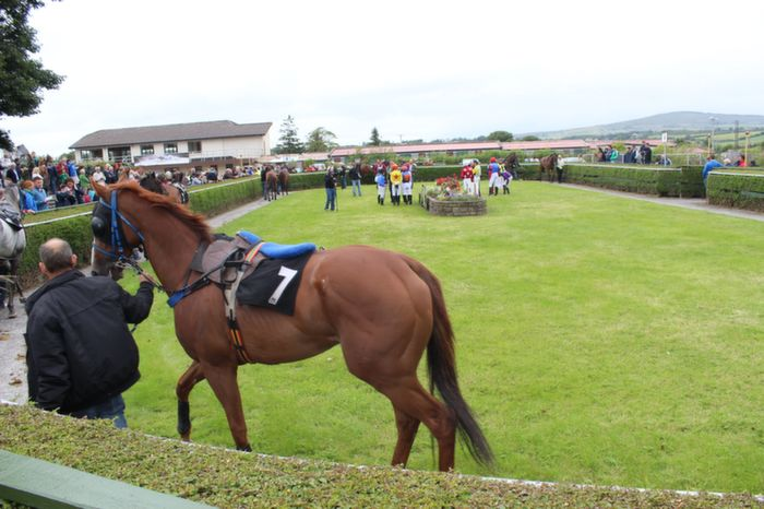 Horses in the parade ring at the Kerry International Horse and Pony Race Meeting at Ballybeggan on Saturday. Photo by Dermot Crean
