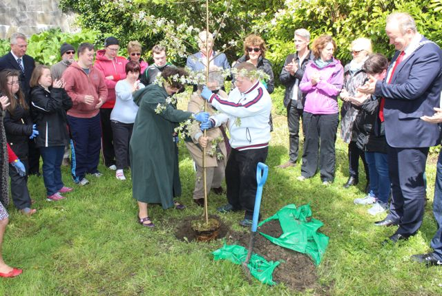 Planting the crabtreen in Pairc An Phiarsaigh on Monday. Photo by Dermot Crean