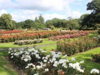 PHOTOS: Has The Town Park Ever Looked This Good?