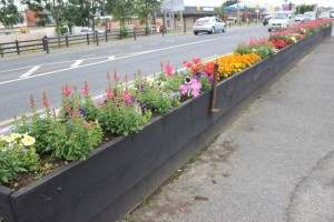 Flower beds in Manor West. Photo by Gavin O'Connor.