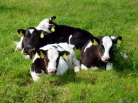 Ardfert Farm Makes Shortlist For Prestigious National Quality Milk Awards