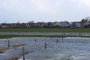 Flood Field 1