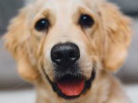 Kerry Animal Welfare Groups Receive Government Funding