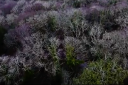 WATCH: Here's A Different Way Of Looking At Ballyseedy Woods