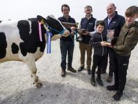 Kieran Harty, Ballyheigue holding his Class 2 winning bull, Ocean Madam Flame and being presented with the Dairymaster Cup by Noel Scanlon with show judge, Mike Maunsell, Stephen Harty and Dylan Godley at the 44th annual Kerry Holstein Friesian Breeders Show and Sale at Gortatlea Mart. Photoghaph: John Reidy