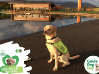 Competition To Get Your's Pet's Portrait And Help Irish Guide Dogs For The Blind
