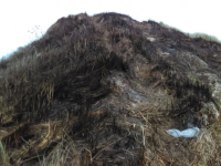 A burnt sand dune at Banna after Sunday night's fire. Photo: Cllr Ferris' Facebook Page