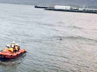The Fenit Lifeboat escorting a dolphin from the shore in Fenit yesterday.