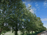 Section Of Trees On Tralee Road To Be Replaced In Coming Weeks