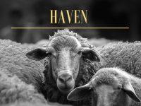 €10,000 Kerry Film Bursary Awarded To 'Haven'