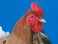 Clodagh McCluskey's 'Feathers', a category winner in this year's Texaco Art Competition.